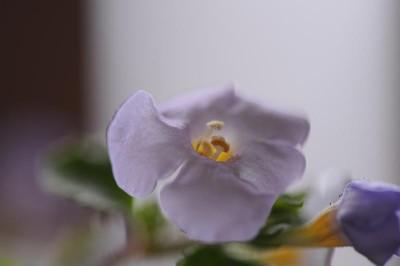 花粉ふんわり