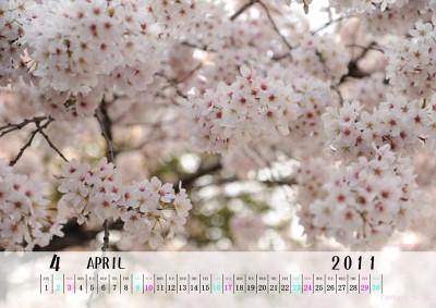 2011年4月 カレンダー 桜