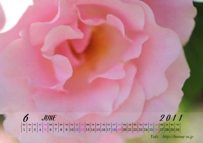 2011年6月 薔薇のカレンダー