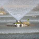 噴水と亀たち