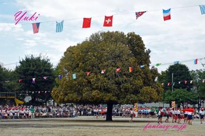キンモクセイの木
