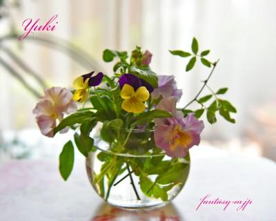 ベランダのお花を集めて