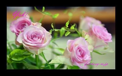 エチオピアのバラ