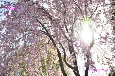 桜 2018年3月