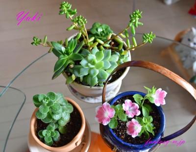 植物の植え替え