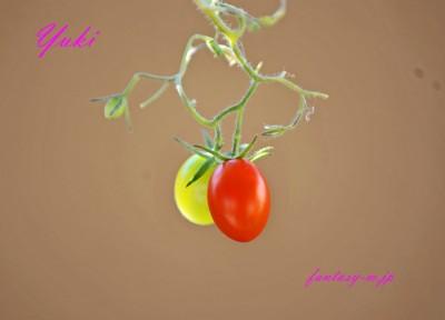 夏のなごりのトマト