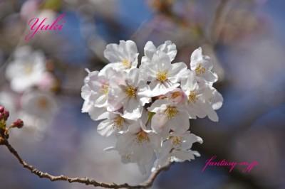 桜の房 2020.03.21