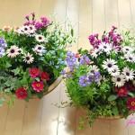春の寄せ植えの花